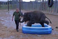 Éléphant d'Asie de bébé à Images libres de droits