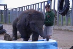 Éléphant d'Asie de bébé et gardien de zoo Images stock
