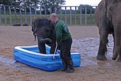 Éléphant d'Asie de bébé et gardien de zoo Image stock