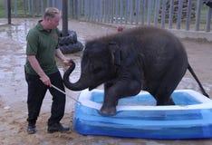 Éléphant d'Asie et gardien de bébé Image stock