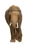 Éléphant d'isolement Images stock