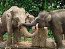 Éléphant dans l'amour Images libres de droits