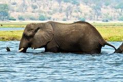 Éléphant dans l'eau Photo stock