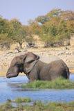 Éléphant dans l'eau Photo libre de droits
