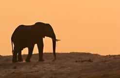 Éléphant dans le coucher du soleil Images stock
