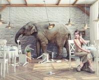 Éléphant dans le restaurant Photo libre de droits