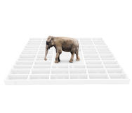 Éléphant dans un labyrinthe Photos stock