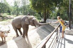 Éléphant de alimentation de femme Photographie stock libre de droits