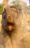 Éléphant de bébé donnant un coup de pied la poussière Photos stock