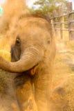 Éléphant de bébé donnant un coup de pied la poussière Image libre de droits