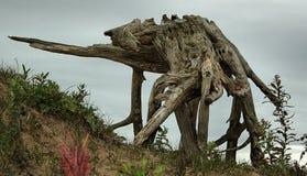 Éléphant de caméléon Images libres de droits
