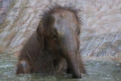 Éléphant de chéri Image libre de droits