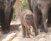 Éléphant de chéri Photographie stock
