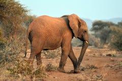 Éléphant de chéri Photographie stock libre de droits