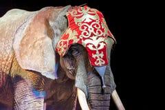 Éléphant de cirque photographie stock libre de droits