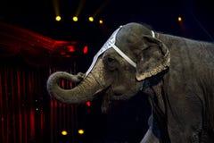 Éléphant de cirque photo stock