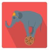 Éléphant de cirque sur le style plat d'icône de roue avec de longues ombres, sur le fond blanc Illustration de vecteur Photographie stock