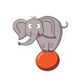Éléphant de dessin animé sur une bille Photographie stock