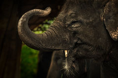 Éléphant de fond Photographie stock libre de droits