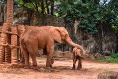 Éléphant de l'Afrique enduisant son bébé du sable Image stock