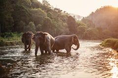 Éléphant de l'Asie en Thaïlande Photographie stock