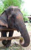 Éléphant de la Thaïlande Images libres de droits