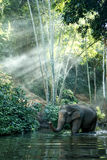 Éléphant de la Thaïlande Photographie stock