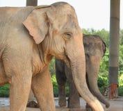 Éléphant de mère et éléphant d'enfant Photo libre de droits