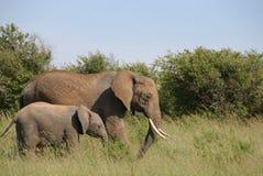 Éléphant de mère et de chéri Photo libre de droits