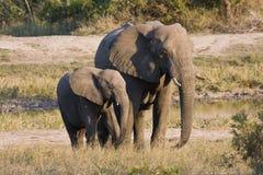 Éléphant de mère et de chéri Photographie stock libre de droits