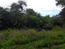 Éléphant de mère et son fils L'emplacement est Somawathi, Sri Lanka Photo stock