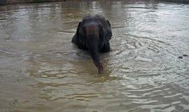 Éléphant de natation Images libres de droits