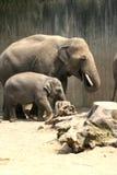 Éléphant de père et d'enfant Image libre de droits