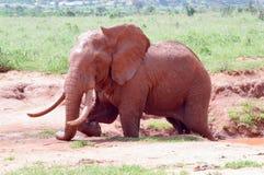 Éléphant de rouge du ` s du Kenya Photos libres de droits