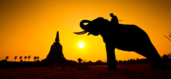 Éléphant de silhouettes et scène de coucher du soleil de wiith de pagoda Photos libres de droits