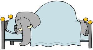Éléphant de sommeil Photos libres de droits