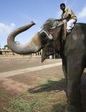 Éléphant de temple - Thanjavur - Inde images libres de droits