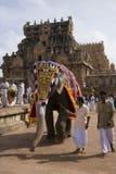 Éléphant de temple - Thanjavur - Inde image libre de droits