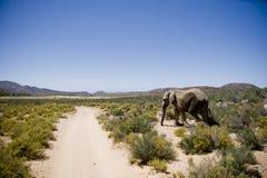 Éléphant en Afrique Image libre de droits