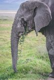 Éléphant en cratère Afrique de ngorongoro photo stock