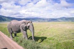 Éléphant en cratère Afrique de ngorongoro image libre de droits