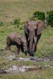 Éléphant en parc national du Kenya, Afrique Images stock