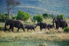 Éléphant en parc national du Kenya, Afrique Photos stock