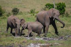 Éléphant en parc national du Kenya, Afrique Image libre de droits