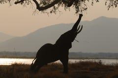 Éléphant errant dans le camping photographie stock