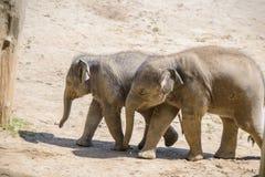 Éléphant et mère de chéri Photographie stock libre de droits