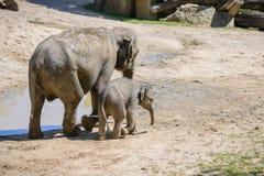 Éléphant et mère de chéri Photo libre de droits