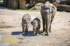 Éléphant et mère de chéri Photographie stock