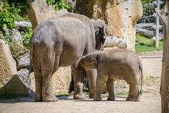 Éléphant et mère de chéri Image libre de droits