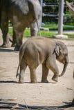 Éléphant et mère de chéri Photos libres de droits
